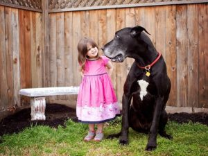 Psi patří mezi naše oblíbence.