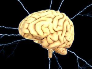 Stres zmenšuje mozek