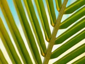 Čtení z palmových listů