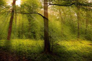 Povoleno kácení v Boubínském pralese, Lesy ČR dostaly výjimku